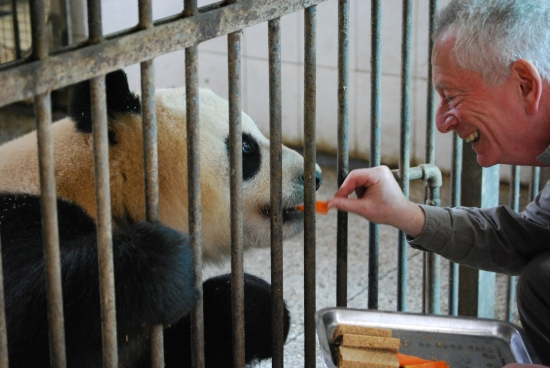 Alf feeds giant panda a carrot