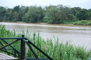 View from our lodge,Alf Oldman, Kinabatangan River, 17-02-13