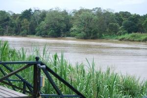View from our lodge,Alf Oldman, Kinabatangan River, 17-02-13